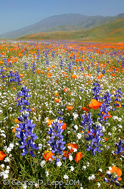 Springtime wildflowers in Shell Creek San Luis Obispo