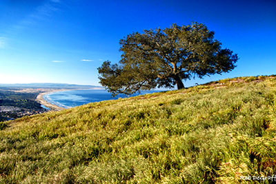 Hike the oak woodlands hight above the Pacific Ocean at the Pismo Preserve